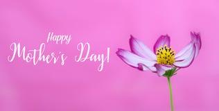 De Dag van gelukkige Moeders! en de roze wilde macrofoto van de kosmosbloem als brede banner roze achtergrond en berichtteksten G royalty-vrije stock afbeeldingen