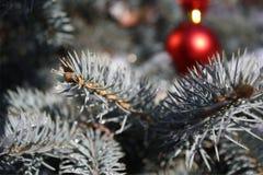De dag van Kerstmis Royalty-vrije Stock Foto's
