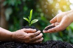 De Dag van de milieuaarde in de handen van bomen die zaailingen kweken Boom Bokeh de groene van de Achtergrond Vrouwelijke handho royalty-vrije stock fotografie