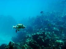 De dag van Nice onder water Stock Foto's