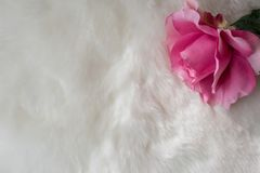 De Dagachtergrond van Valentine ` s met wit bont en enige roze zijde r Stock Afbeelding