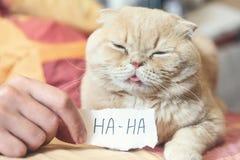 De Dagconcept van April Fools 'met grappig humeurig Schots kat en document blad met HAHA 1 April, Alle Dwazen 'Dag, humeur, stree stock foto's