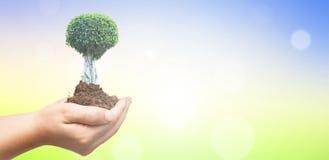 De dagconcept van het wereldmilieu: Menselijke handen die grote boom over groene bosachtergrond houden Stock Afbeeldingen