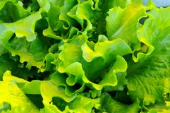 De Dagen van de salade stock fotografie