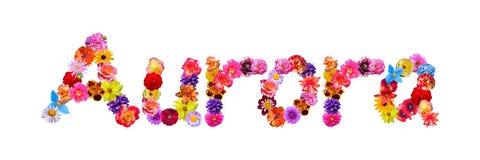 De Dageraad van de bloemennaam vector illustratie