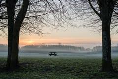 De dageraad van het de lijstsilhouet van de bomenbank Stock Fotografie