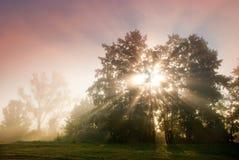 De dageraad van het de zomerlandschap in het hout door de rivier in een mist Stock Fotografie