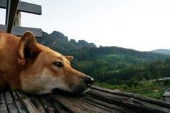 De dakloze hond die uit klip, Bruine Hond ontspant op de vloer in de ochtend kijken royalty-vrije stock afbeeldingen
