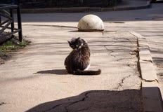 De dakloze kat wast zich op de straat stock afbeeldingen