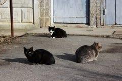 De dakloze katten - zwarte en de kleur van riet - en een zwart-wit katje zonnebaden op de eerste de lentezon op het asfalt royalty-vrije stock foto's