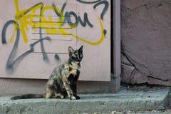 De dakloze mengen-kleurenkat met groene ogen zit in de straat stock foto's