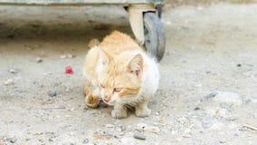De dakloze vuile kat zit in openlucht Droevig hongerig gemberkatje dichtbij dumpster op straat het bekijken camera stock footage