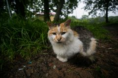 De dakloze zitting van de kleurenkat in het gras stock fotografie