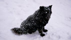 De dakloze zwarte hond in de wintersneeuwval draait zijn hoofd en bekijkt de camera stock video