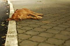 De daklozen dwalen hond af Stock Fotografie