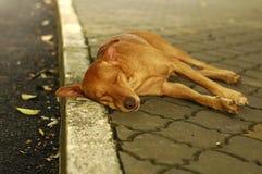 De daklozen dwalen hond af Royalty-vrije Stock Foto's