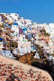 De daklozen dwalen hondzitting op steenmuur in Oia stad, Santorini, Griekenland af Royalty-vrije Stock Foto