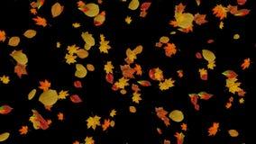 De dalende achtergronden van de herfstbladeren stock videobeelden