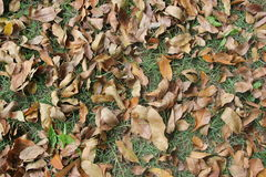 De dalende bladeren Stock Foto's