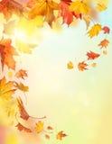 De dalende bladeren van de herfst Stock Afbeelding