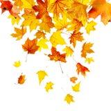 De dalende Bladeren van de Herfst Stock Afbeeldingen