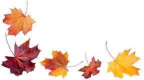 De Dalende Bladeren van de herfst Het ontwerp van de herfst Kroon van kleurrijke bladeren Malplaatjes voor aanplakbiljetten, bede royalty-vrije stock afbeeldingen