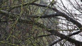 De dalende sneeuw in een de winterpark met defocused sneeuw en concentreert zich op boomtakken stock footage