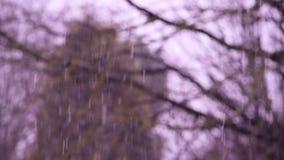 De dalende sneeuw in een de winterpark met lichtjes defocused bomenachtergrond stock video