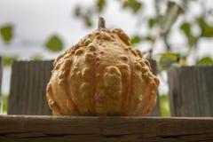 De Daling Autumn Background van fotopompoenen royalty-vrije stock afbeelding