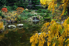 De daling kleurt Japanse Tuin stock foto's