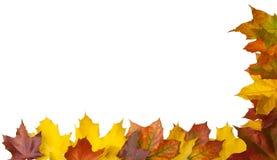 De daling van bladeren Stock Afbeeldingen