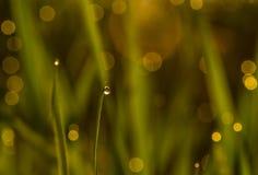 De daling van de dauw op gras Royalty-vrije Stock Afbeeldingen