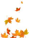 De daling van de herfst royalty-vrije stock fotografie