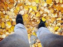 De daling van de herfst geel blad op boomachtergrond Stock Foto's