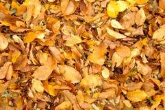 De daling van de herfstbladeren Royalty-vrije Stock Foto's
