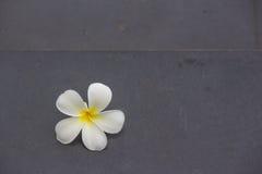 De daling van de Plumeriabloem op trap Royalty-vrije Stock Afbeeldingen