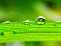 De daling van de regen Stock Afbeelding
