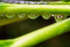 De daling van de regen Stock Foto's