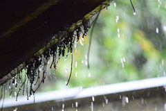 De daling van de regen Stock Afbeeldingen