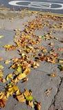 De daling van de herfst geel blad op boomachtergrond Stock Afbeeldingen