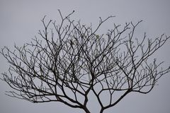 De daling van de herfst geel blad op boomachtergrond stock foto