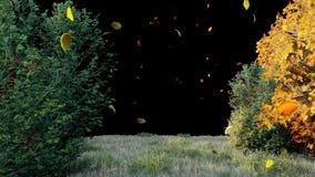 De daling van de herfstbladeren van bomen in de herfstpark De herfst kleurrijk Park op een Zonnige dag met alfakanaal stock video