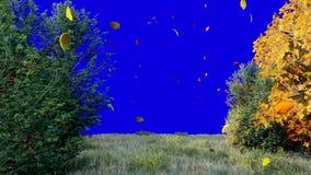 De daling van de herfstbladeren van bomen in de herfstpark De herfst kleurrijk Park op een Zonnige dag voor het blauw scherm stock videobeelden