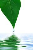 De daling van het blad en van het water Stock Foto's