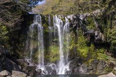 De daling van het Bueatifulwater van regenwoud stock afbeeldingen