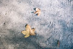 De daling van het esdoornblad op grond tijdens de herfst in Seoel, Zuid-Korea stock afbeeldingen