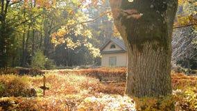 De daling van het de herfstblad op een zonnige dag in de begraafplaats stock videobeelden