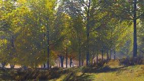 De daling van het de herfstblad van vergankelijk bos bij zonnige dag stock footage
