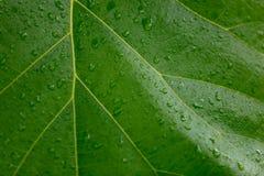 De daling van het water op blad stock afbeeldingen