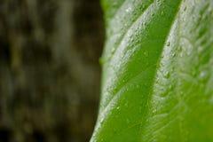 De daling van het water op blad stock afbeelding